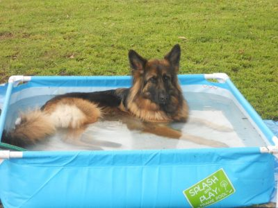 Bella in her pool